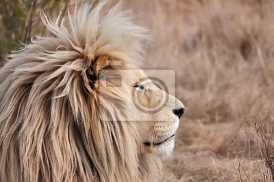 crinière de lion 2