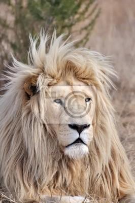 crinière de lion