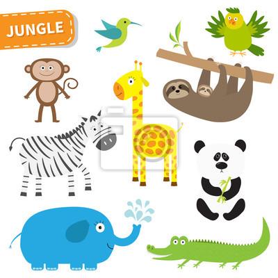 Cute Dschungel Tier-Set. Nette Zeichentrickfilm-Figur. Colibri, Papagei, Affe, Alligator, Giraffe, Faultier, Zebra, Panda, Elefant. Baby-Sammlung. Weißer Hintergrund. Isoliert. Flaches Design