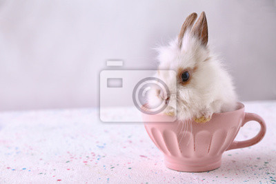 Fototapete Cute fluffy rabbit in cup on table