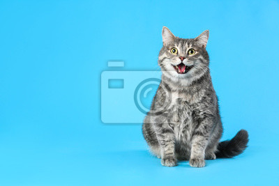 Fototapete Cute gray tabby cat on light blue background, space for text. Lovely pet