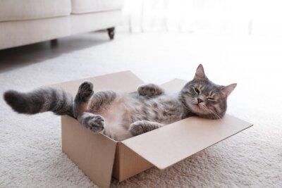 Fototapete Cute grey tabby cat in cardboard box on floor at home