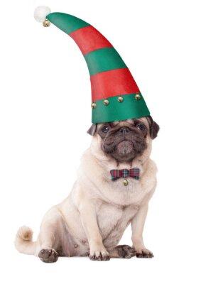 Mops Bilder Weihnachten.Fototapete Cute Mops Welpen Hund Trägt Einen Elf Hut Für Weihnachten Auf