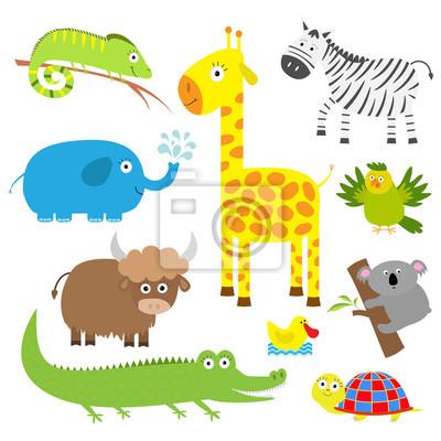 Cute Tier gesetzt. Baby Hintergrund. Koala, Alligator, Giraffe, Leguan, Zebra, Yak, Schildkröte, Elefant, Ente und Papagei. Flaches Design