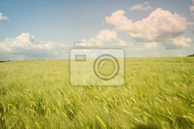 Fototapete Cyan und Grün Feldlandschaft