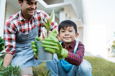 Fototapete dad and son planting a plant gardening at their house together. parenting outdoor activity with son