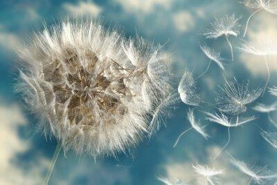 Fototapete Dandelion Seeds Loosing im Wind