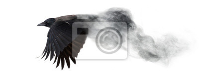 Fototapete dark crow flying from smoke isolated on white