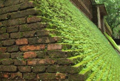 Das Gras auf den alten Mauern