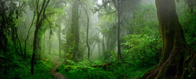 Fototapete Deep tropical jungles of Southeast Asia in august