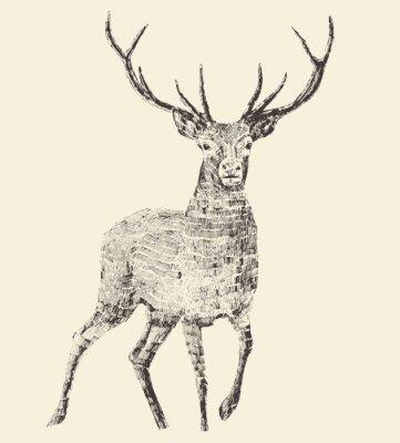 Fototapete Deer Engraving, Vintage Illustration, Vector