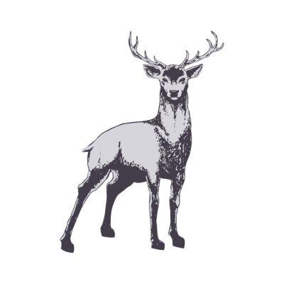 Fototapete Deer isolated on white
