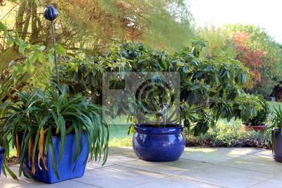 Fototapete Dekoration Garten Terrasse Topf Blume