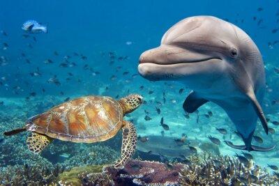 Fototapete Delfin und Schildkröte Unterwasser auf Riff