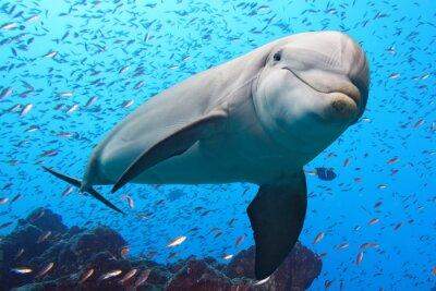 Fototapete Delfin Unterwasser auf Riff Hintergrund