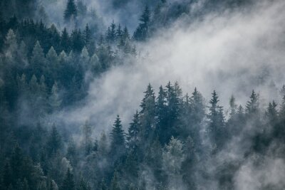Fototapete Dense morning fog in alpine landscape with fir trees and mountains.