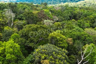Fototapete Der Amazonas-Wald in Brasilien