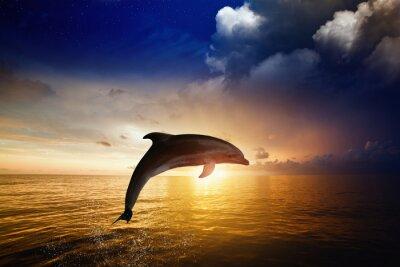 Fototapete Der Delphin springend