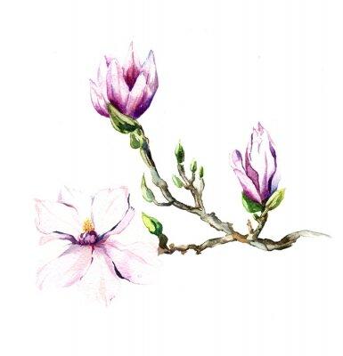 Fototapete der Magnolia Blumen Aquarell isoliert auf den weißen Hintergrund