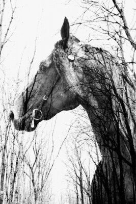 Fototapete Der Wald im Inneren des Pferdes ina Kunst, multiexposition