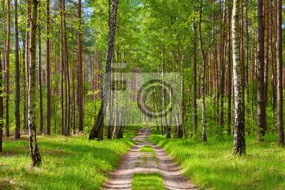 Der Weg Durch Den Wald Schone Tapete Fototapete Fototapeten