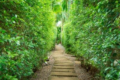 Fototapete Der Weg im Garten