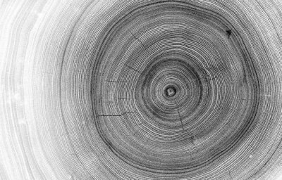 Fototapete Detailed macro view of felled tree trunk or stump. Black and white organic texture of tree rings with close up of end grain.