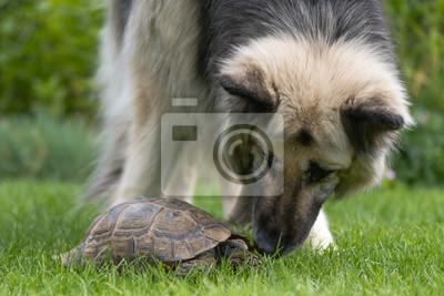 Untersucht SchäferhundDer SchäferhundDer Deutscher Deutscher Untersucht Schildkröte Die Schildkröte Die SchäferhundDer Deutscher 80mvNOywn