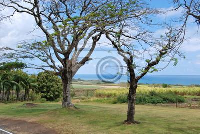 Fototapete Deux arbres