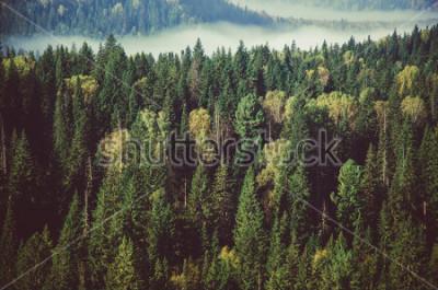 Fototapete dichter Nebel bedeckt mit dichtem Nadelwald.