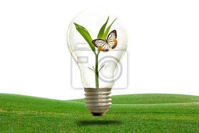 Die Erhaltung der natürlichen Licht.