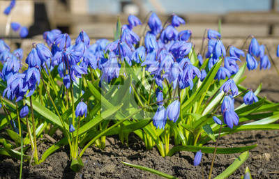 Die Ersten Blumen Des Fruhlings Schneeglockchen Blumen Blumen