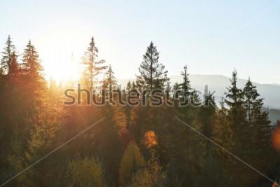 Fototapete Die Gebirgsherbstlandschaft mit buntem Wald. Drastische Morgenszene, roter und gelber Herbstlaub. Location place Karpaten, Ukraine, Europa.