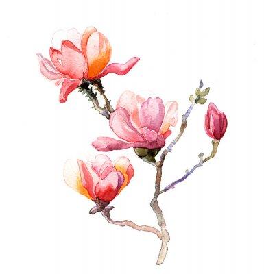 Fototapete die magnolia Aquarell isoliert auf den weißen Hintergrund