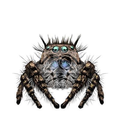 Die spinne hat viele augen, behaarte beine, symmetrische skizze ...