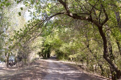 Fototapete Die Straße im Wald