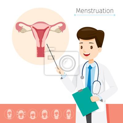 Doktor beschreibt über ursache zu menstruation, weiblich, interne ...