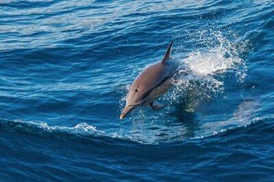 Fototapete Dolphin springt aus dem Wasser