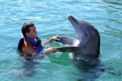 Fototapete dolphin swim with man