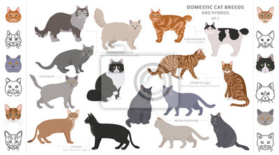 Fototapete Domestic cat breeds and hybrids collection isolated on white. Flat style set. Different color and country of origin