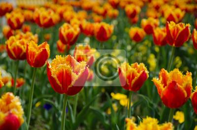 Draußen, nahaufnahme, flora, blühen, vibrierend, garten, mit ...