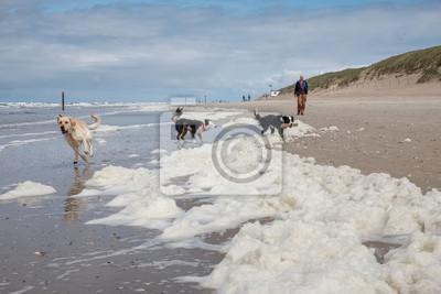 drei hunde spielen am strand von algen in texel niederlande fototapete fototapeten tour. Black Bedroom Furniture Sets. Home Design Ideas