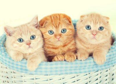 Fototapete Drei kleine Kätzchen in den Korb