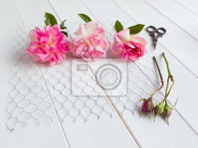 Drei rosen mit rosenknospen auf hühnerdraht auf weißem holz ...