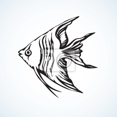 Dreieckiger fisch vektor zeichnung fototapete • fototapeten ...
