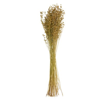 Fototapete Dried flower stalks in the field decorate a flower vase isolated on white background with clipping path