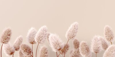 Fototapete Dry fluffy flowers beige pastel color boho background 3d rendering. Abstract Pampas grass isolated - calm floral wallpaper.