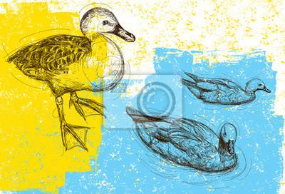 Ducks Hintergrund