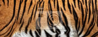 Fototapete Echte Tiger Haut Textur, Fell