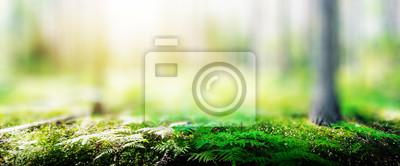 Fototapete Ecology background